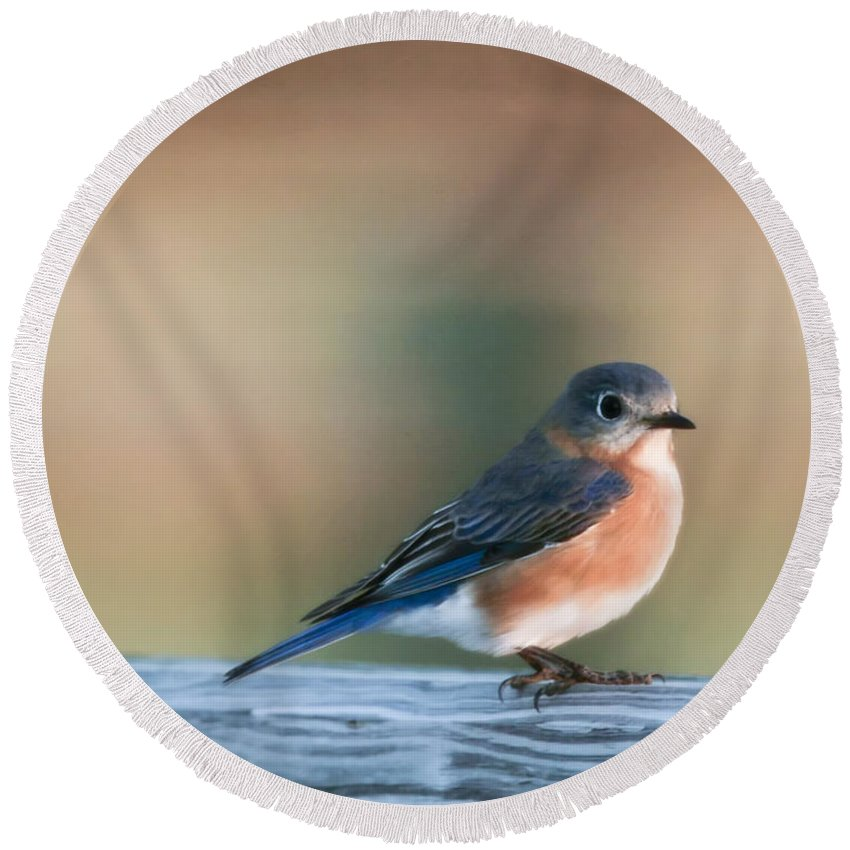 Bird Round Beach Towel featuring the photograph Pretty In Blue by Phill Doherty