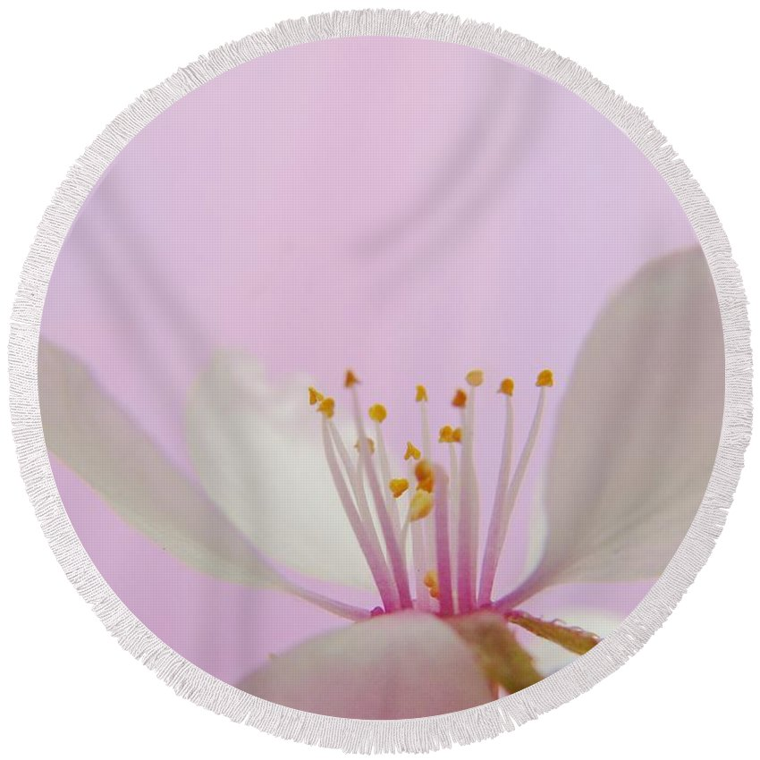 Cherry Round Beach Towel featuring the photograph Pretty In Pink Cherry Blossom by Barbara St Jean