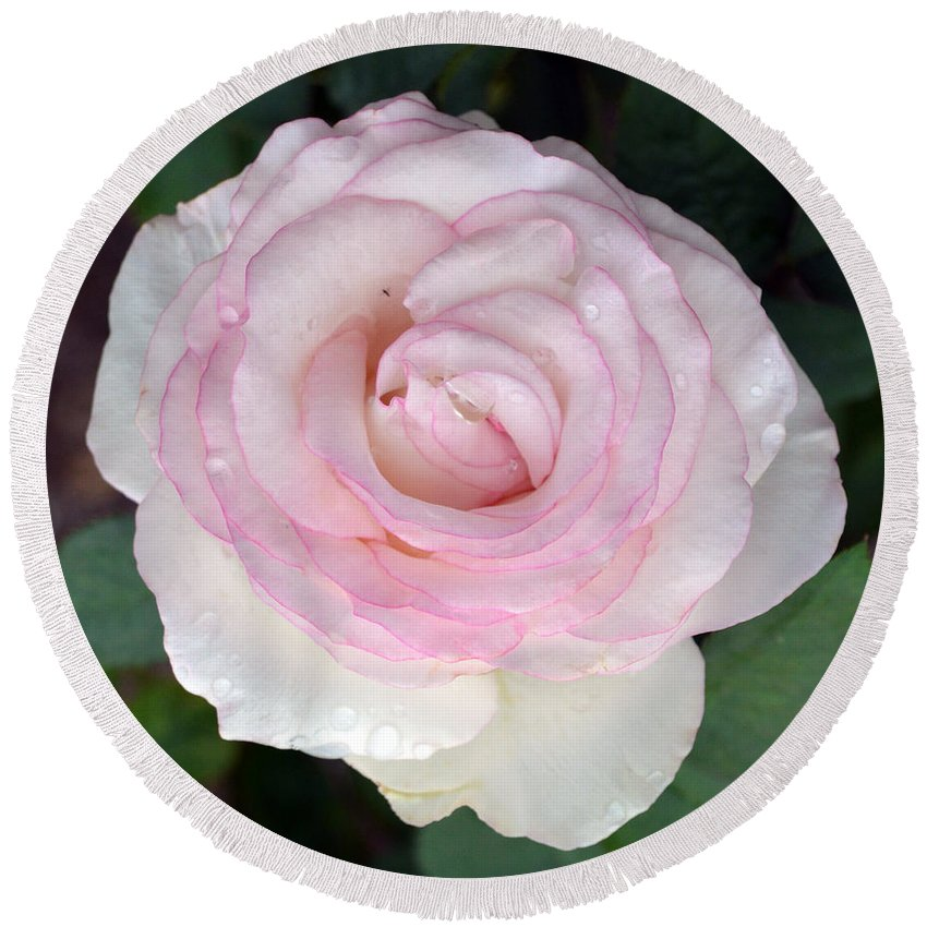 Flower Round Beach Towel featuring the photograph Pretty In Pink Rose by Karen Sturgill