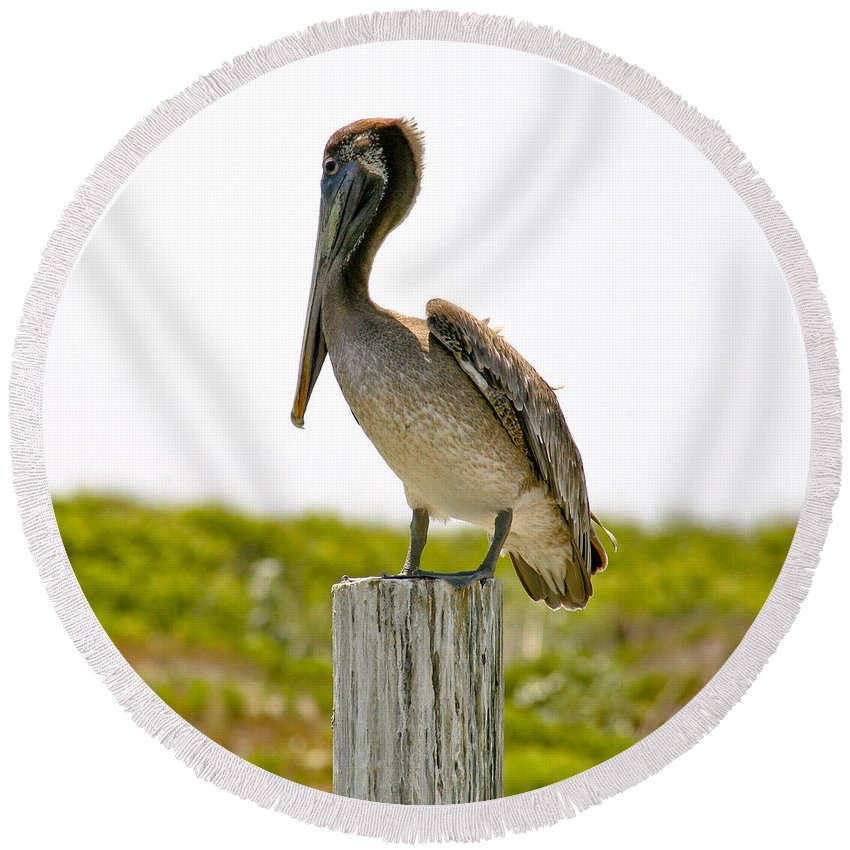 Pelican Round Beach Towel featuring the photograph Pretty Pelican by Marilyn Hunt
