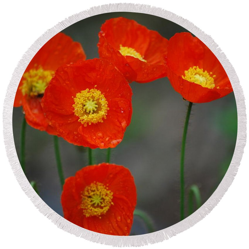 Poppies Round Beach Towel featuring the photograph Pretty Poppy by Lori Tambakis
