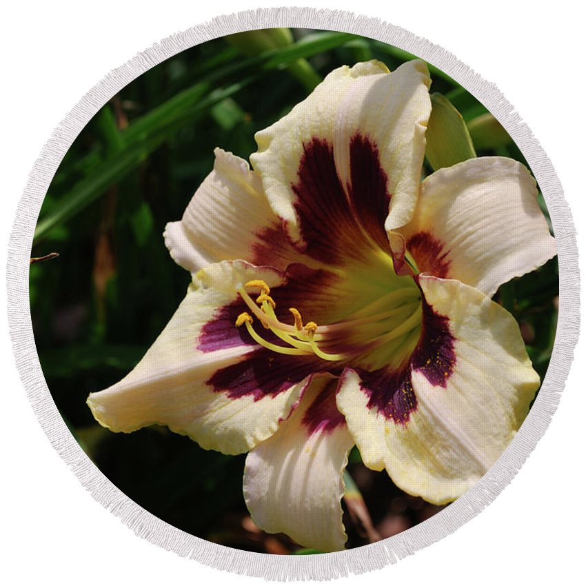 Lily Round Beach Towel featuring the photograph Pretty Single Blooming Daylily In A Garden by DejaVu Designs