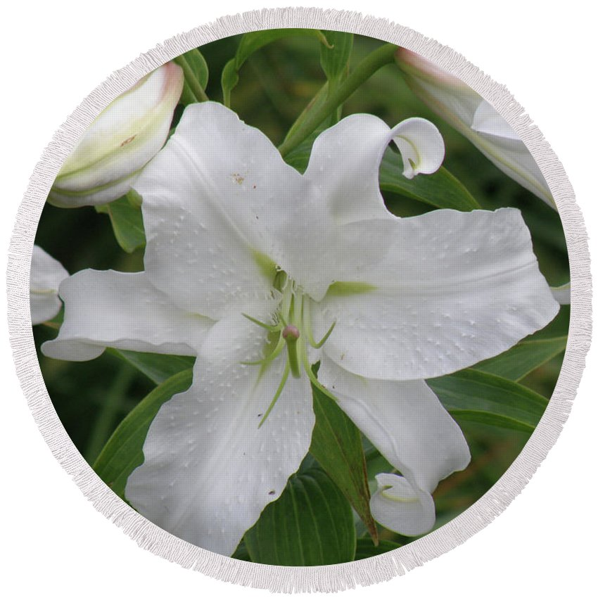 Lily Round Beach Towel featuring the photograph Pretty White Lilies Blooming In A Garden by DejaVu Designs