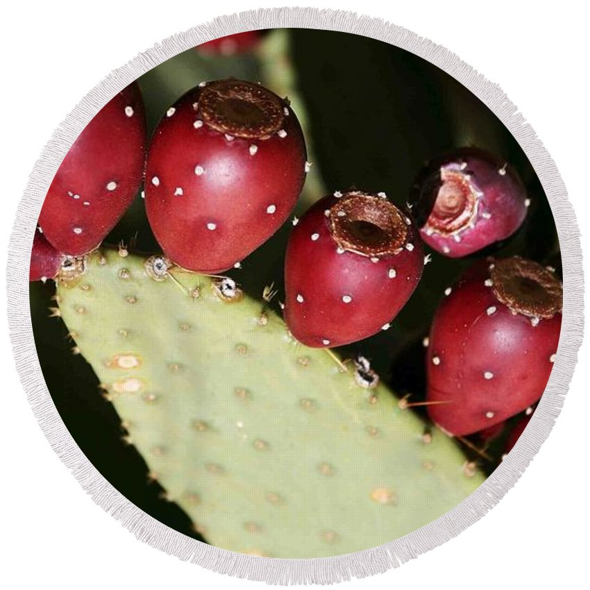 Plant Round Beach Towel featuring the photograph Prickly Pear-jerome Arizona by Nelson Strong