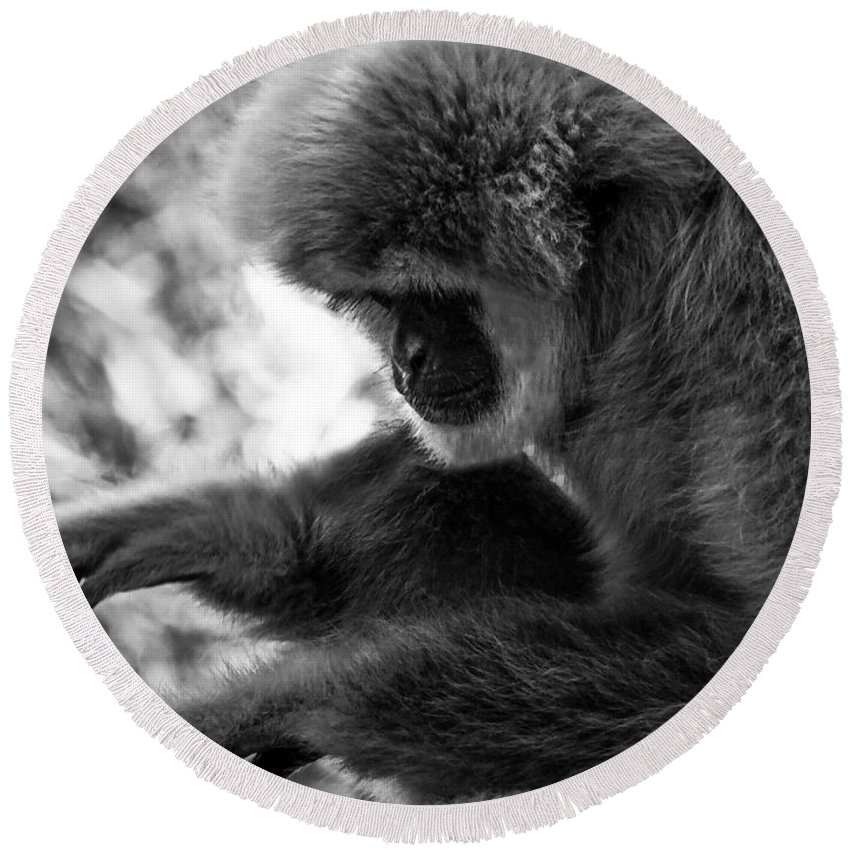 Primate Round Beach Towel featuring the photograph Primate 1 by Kristopher Bedgood