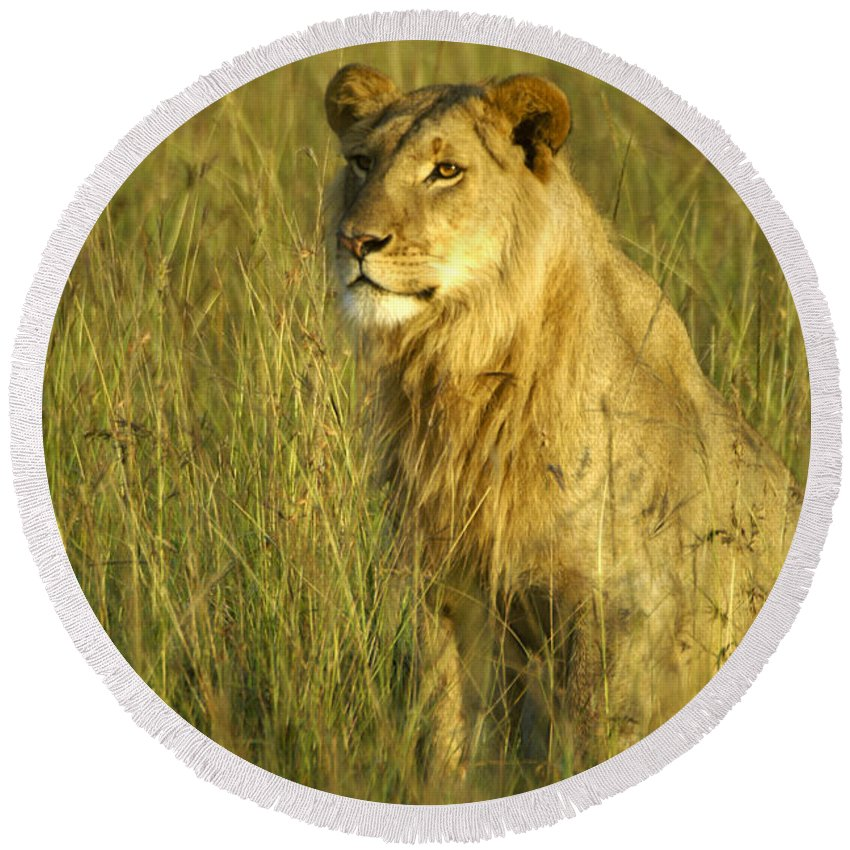 Africa Round Beach Towel featuring the photograph Princely Lion by Michele Burgess
