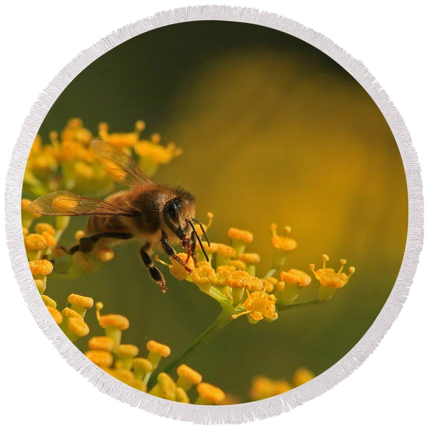 Honey Round Beach Towel featuring the photograph Proboscis by Craig Corwin