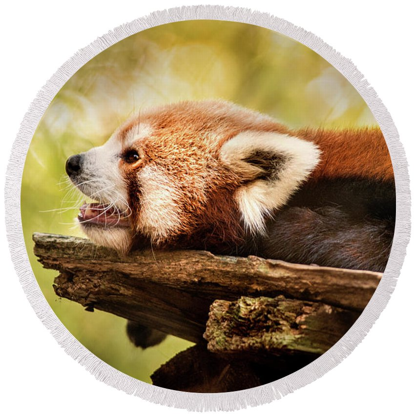 Animal Round Beach Towel featuring the photograph Profile Of A Red Panda by Don Johnson