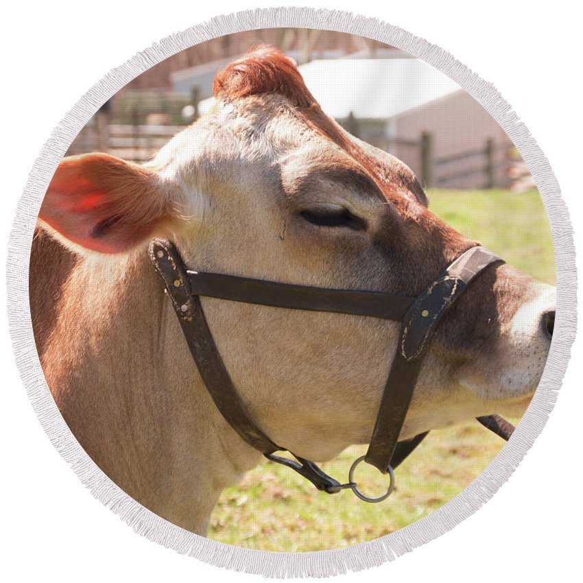 Cow Round Beach Towel featuring the photograph Profile Of Brown Cow by Diane Schuler