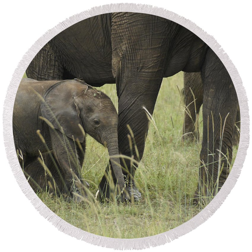 Africa Round Beach Towel featuring the photograph Protecting The Little One by Michele Burgess