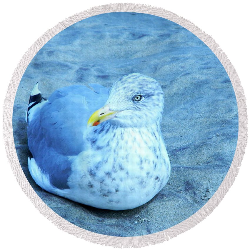 Seagull Contentedly Sitting On The Beach Round Beach Towel featuring the digital art Proud Bird by Expressionistart studio Priscilla Batzell
