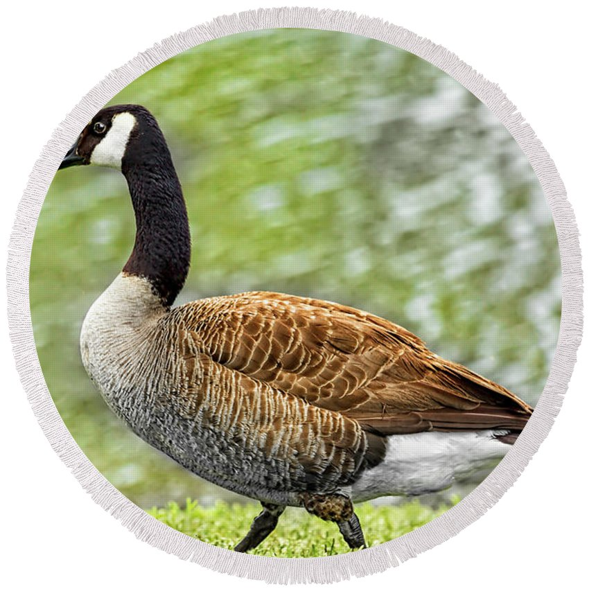 Goose Round Beach Towel featuring the photograph Proud Goose by Kay Brewer
