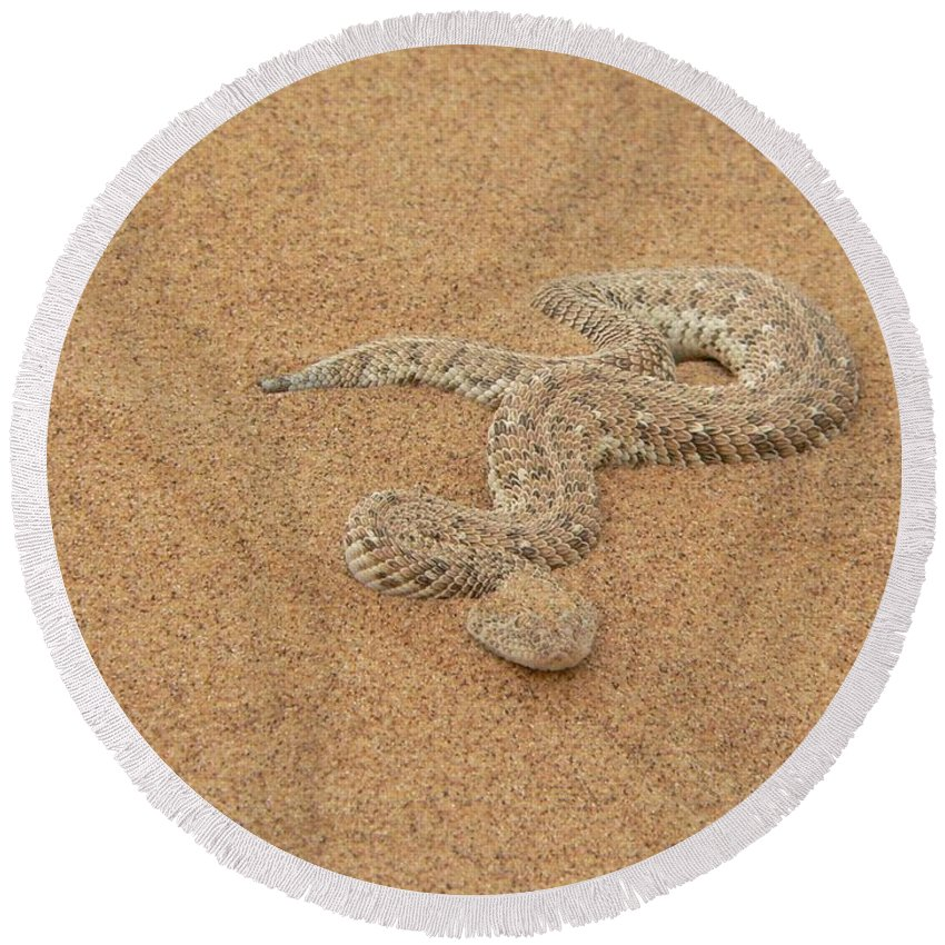Snake Round Beach Towel featuring the photograph Puff Adder Snake by FL collection