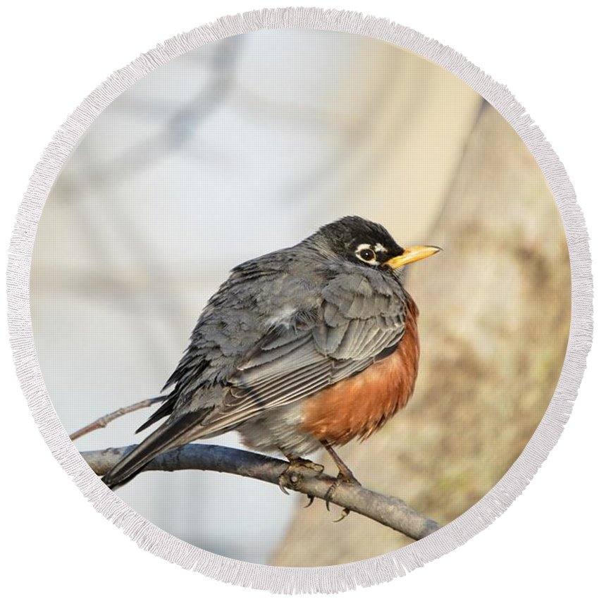 American Round Beach Towel featuring the photograph Puffed Robin by Bonfire Photography