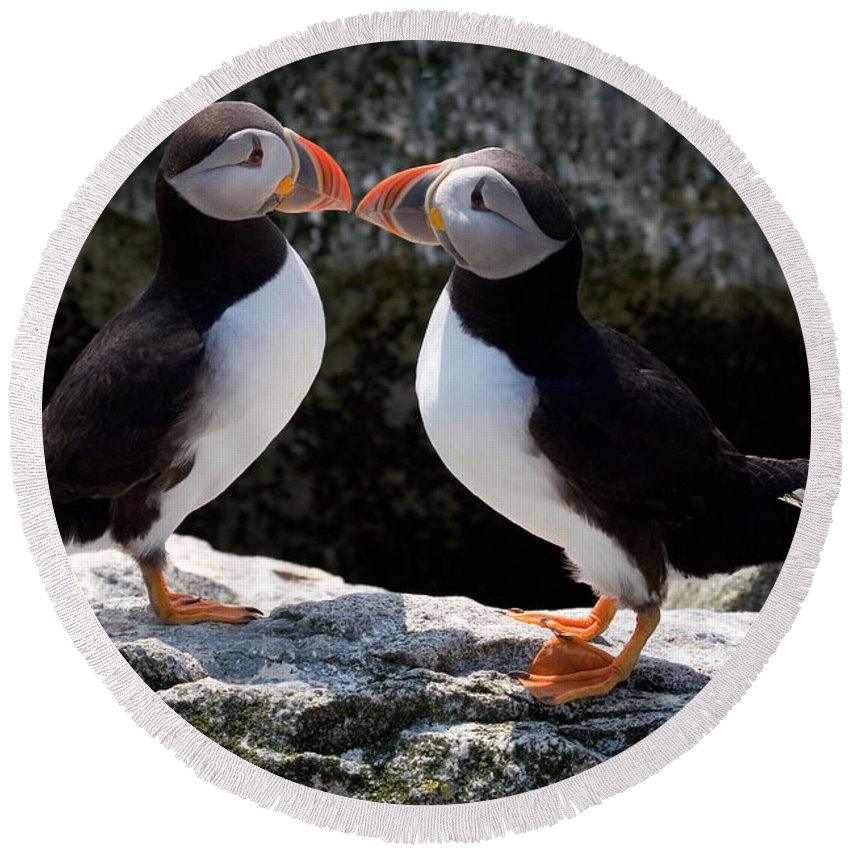Puffin Round Beach Towel featuring the photograph Puffin Love by Brent L Ander