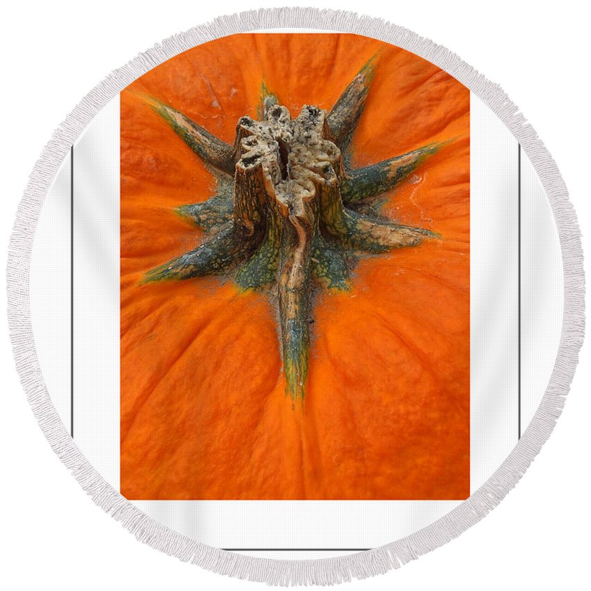 Pumpkin Round Beach Towel featuring the photograph Pumpkin Stem Poster by Mike Nellums