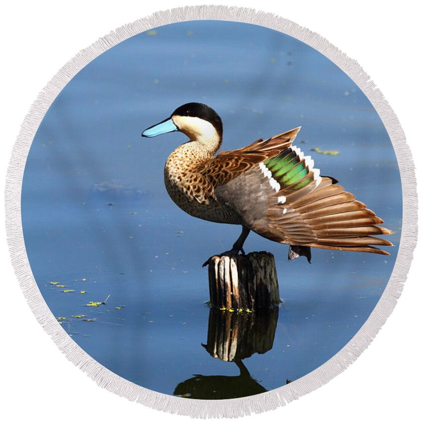 Duck Round Beach Towel featuring the photograph Puna Teal Reflections by James Brunker