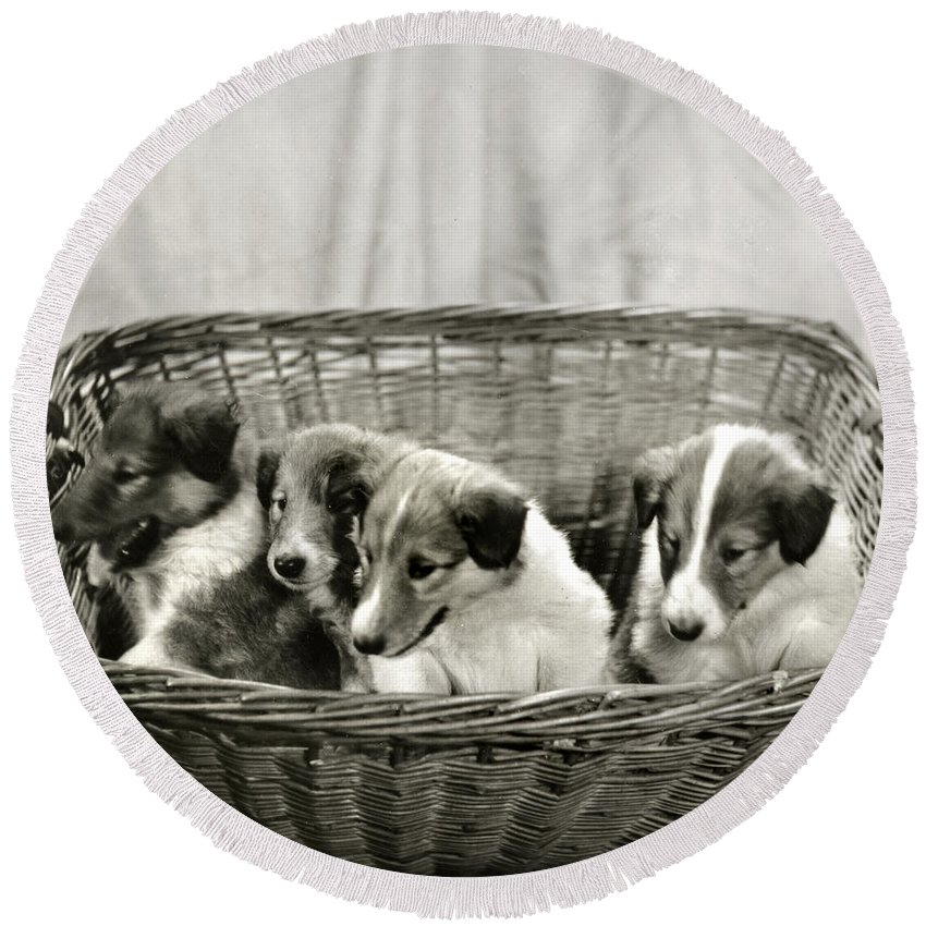 Vintage Round Beach Towel featuring the photograph Puppies Of The Past by Marilyn Hunt
