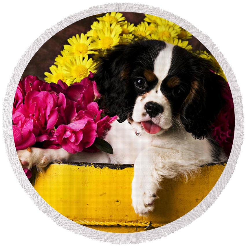 Puppy Dog Cute Doggy Domestic Pup Pet Pedigree Canine Creature Soccer Ball Round Beach Towel featuring the photograph Puppy In Yellow Bucket by Garry Gay