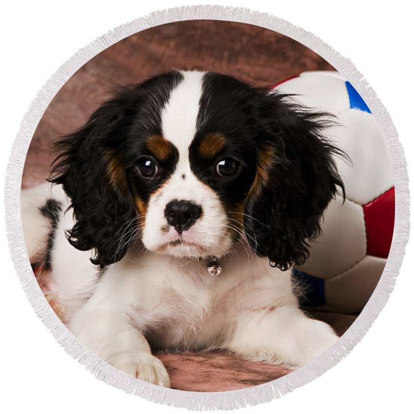 Puppy Dog Cute Doggy Domestic Pup Pet Pedigree Canine Creature Soccer Ball Round Beach Towel featuring the photograph Puppy With Ball by Garry Gay