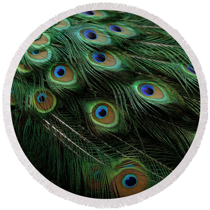Bird Round Beach Towel featuring the photograph Pure Peacock by Michael J Samuels