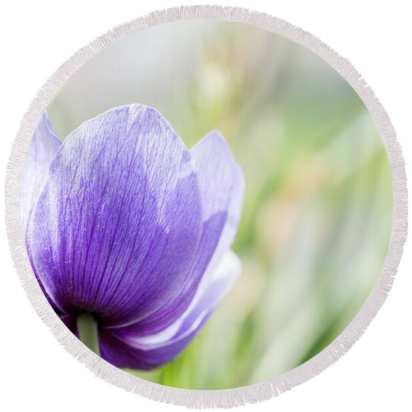 Purple Anemore Flower Round Beach Towel featuring the photograph Purple Anemore Flower by Iris Richardson