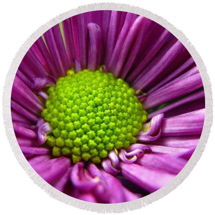 Flower Round Beach Towel featuring the photograph Purple And Green by Rhonda Barrett