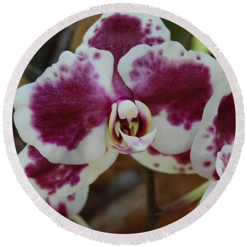 Orchid Round Beach Towel featuring the photograph Purple And White Orchid by Linda Benoit