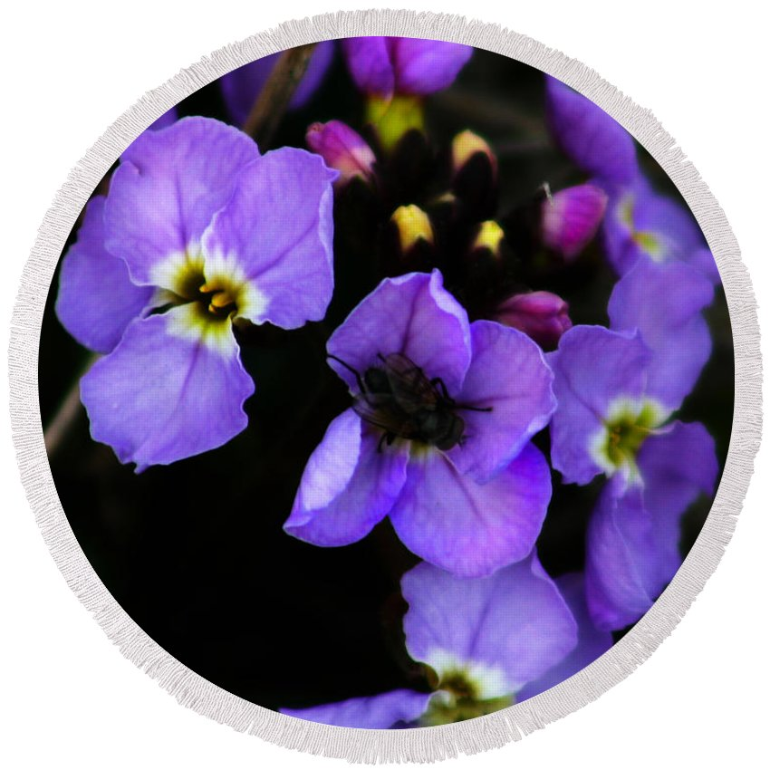 Flowers Round Beach Towel featuring the photograph Purple Arctic Wild Flowers by Anthony Jones