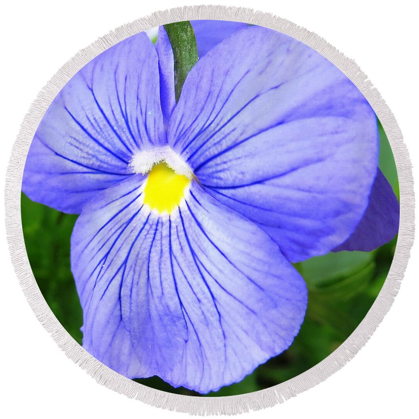 Purple Blue Pansey Flower Round Beach Towel featuring the photograph Purple Blue Pansey by Stephanie Forrer-Harbridge