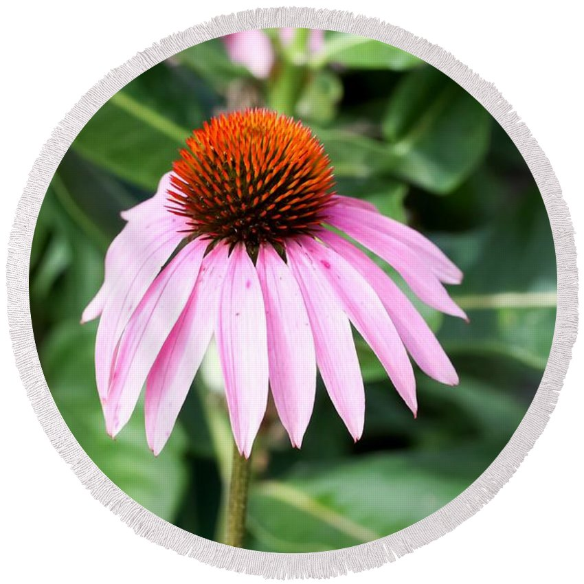 Purple Coneflower Round Beach Towel featuring the photograph Purple Coneflower by Cynthia Woods