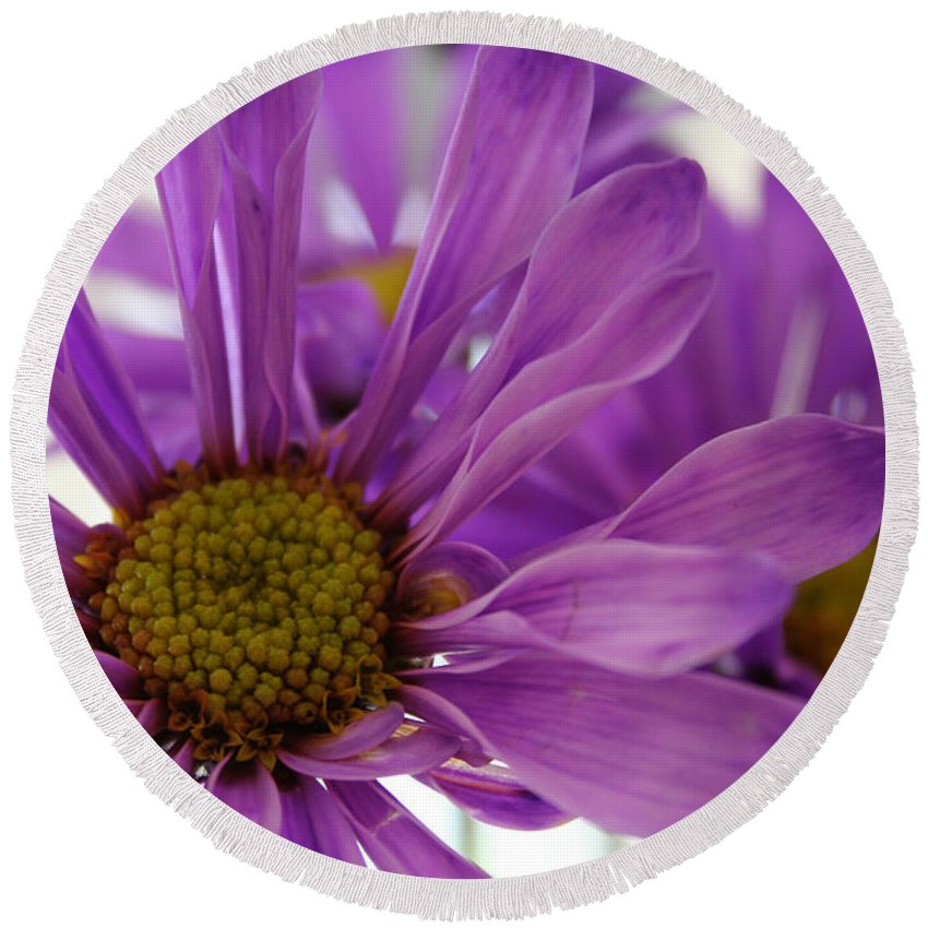 Flowers Purple Macro Daisy Spring Yellow Digital Photography Round Beach Towel featuring the photograph Purple Delight by Linda Sannuti