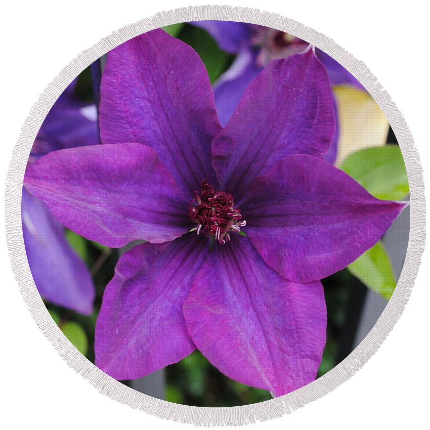Flower Round Beach Towel featuring the photograph Purple Floral by Jost Houk