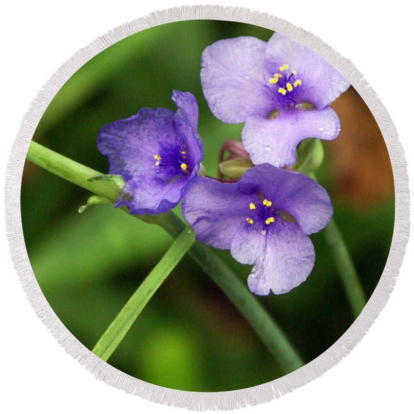 Wildflower Round Beach Towel featuring the photograph Purple Flower by Marty Koch