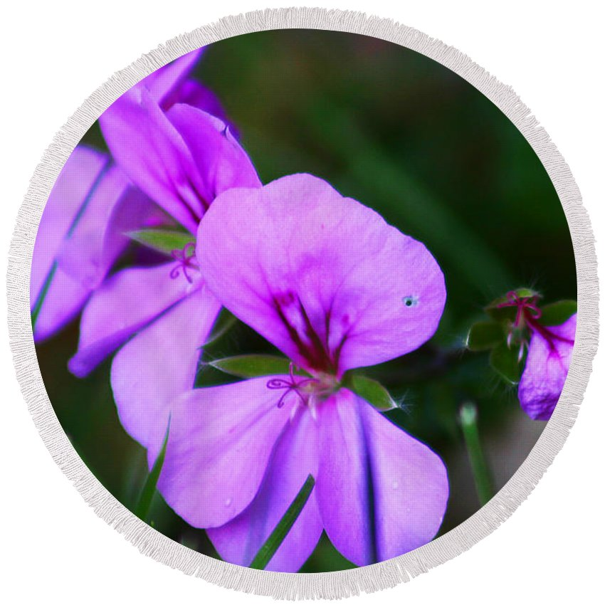 Flowers Round Beach Towel featuring the photograph Purple Flowers by Anthony Jones