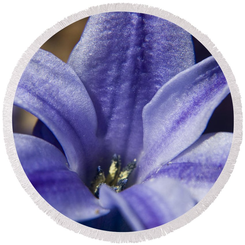 Hyacinth Round Beach Towel featuring the photograph Purple Hyacinth by Teresa Mucha