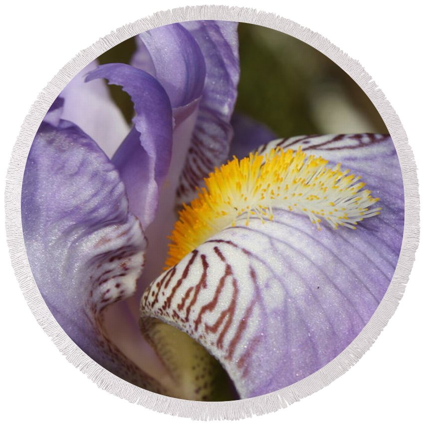 Iris Round Beach Towel featuring the photograph Purple Iris Closeup by Carol Groenen