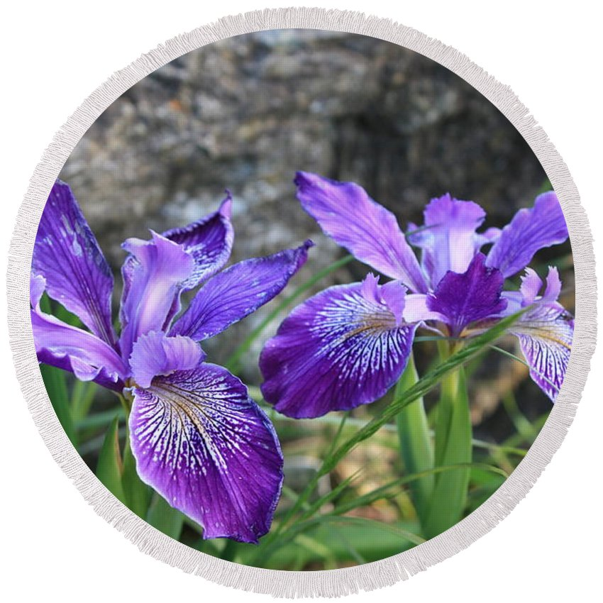 Purple Round Beach Towel featuring the photograph Purple Irises With Gray Rock by Carol Groenen