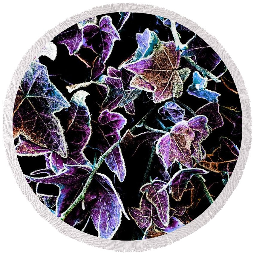 Purple Round Beach Towel featuring the photograph Purple Ivy by Colin Drysdale