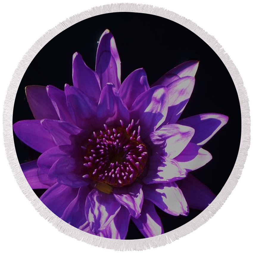 Photograph Round Beach Towel featuring the photograph Purple Lily Monet by Eric Schiabor