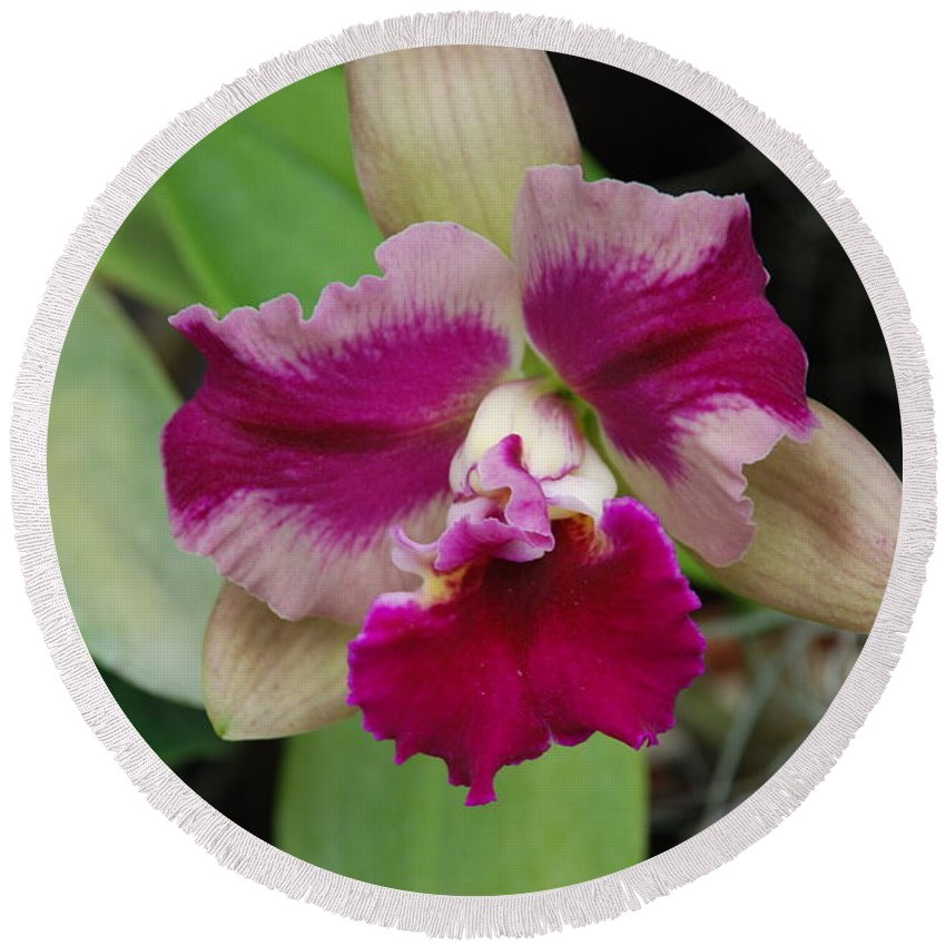 Macro Round Beach Towel featuring the photograph Purple Orchid by Rob Hans