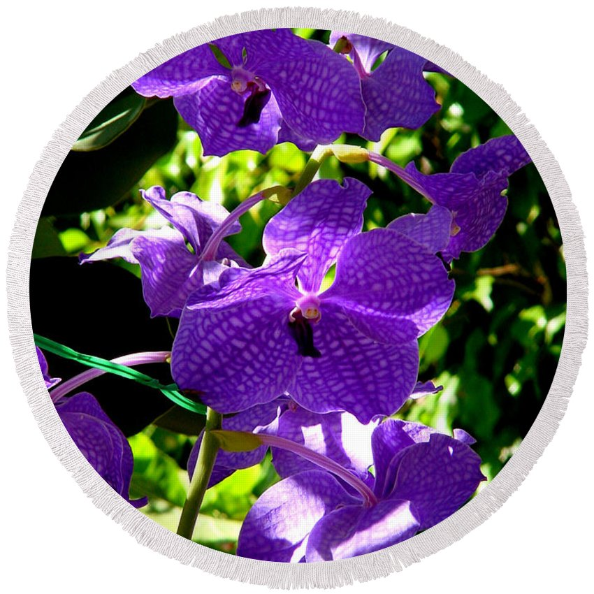 Orchids Round Beach Towel featuring the photograph Purple Orchids by Susanne Van Hulst