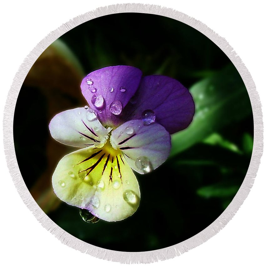 Flower Round Beach Towel featuring the photograph Purple Pansy by Anthony Jones