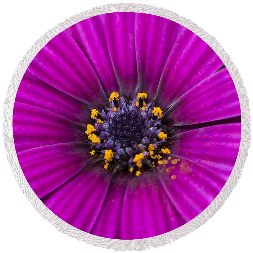 Flower Round Beach Towel featuring the photograph Purple Passion by Andrea Silies