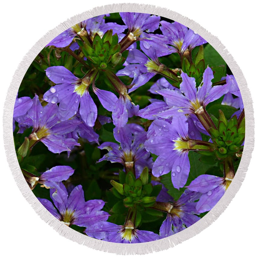 Purple Flower Plant Green Photograph Photography Round Beach Towel featuring the photograph Purple Perspective by Shari Jardina