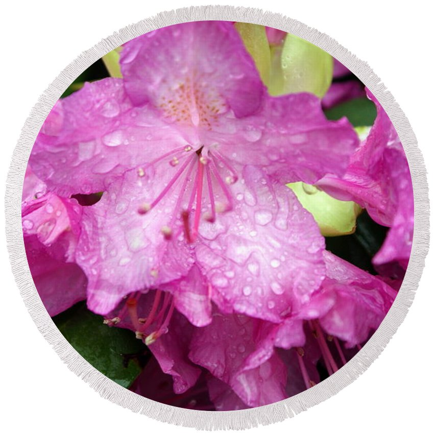 Flowers Round Beach Towel featuring the photograph Purple Pink Horizontal by Marty Koch