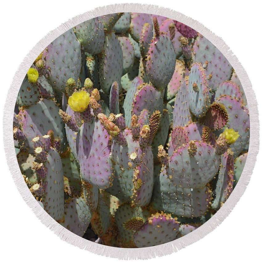Cactus Round Beach Towel featuring the photograph Purple Prickly Pear 1 by Aimee L Maher ALM GALLERY