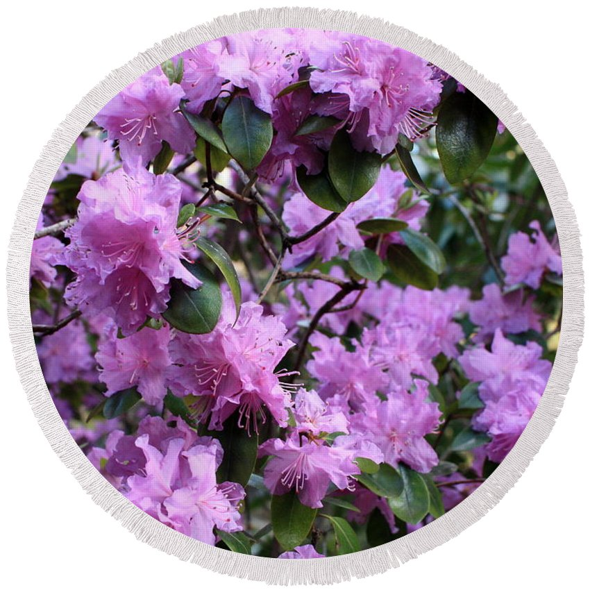 Spring Round Beach Towel featuring the photograph Purple Rhododendrons by Carol Groenen