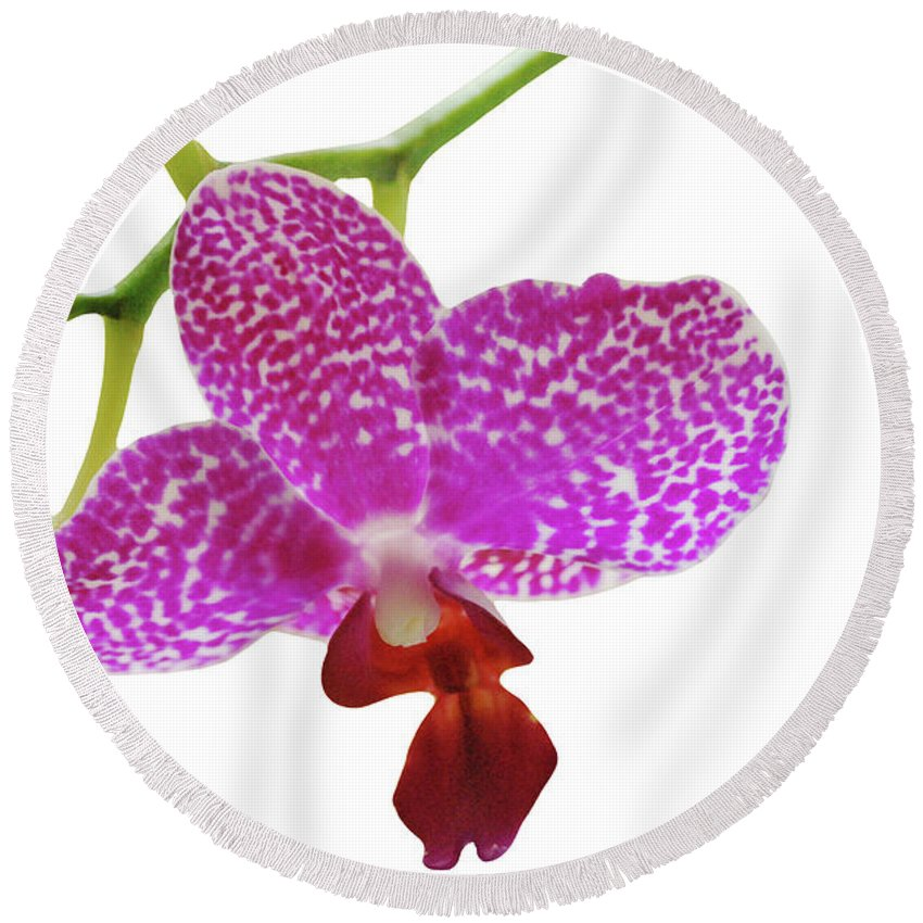 Phalaenopsis Round Beach Towel featuring the photograph Purple Spotted Orchid On White by Heather Kirk