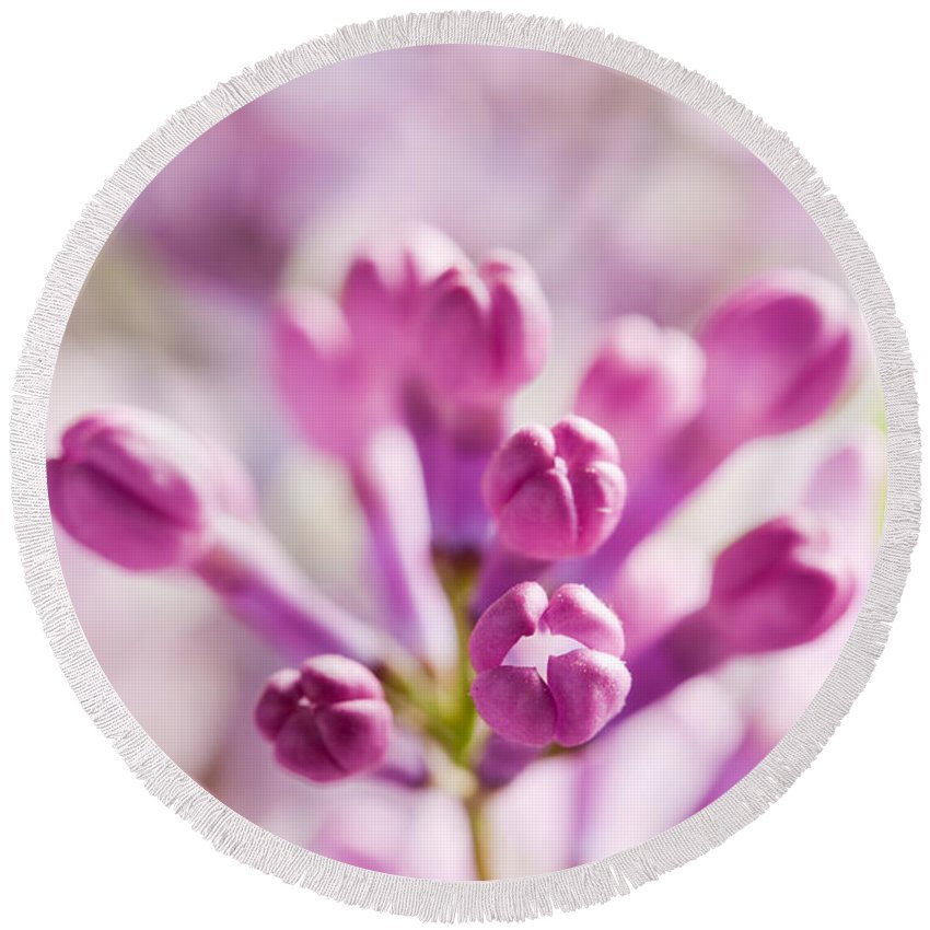Lilac Round Beach Towel featuring the photograph Purple Spring Lilac Flowers Blooming Close-up by Michal Bednarek